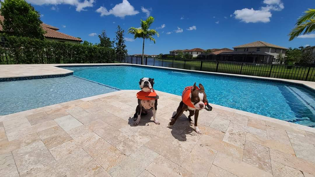 Two dogs on a pool deck of a single family home enjoying themselves.